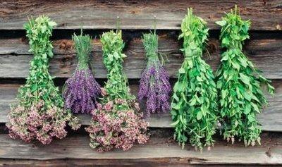 نخستین نمایشگاه گیاهان دارویی شیراز