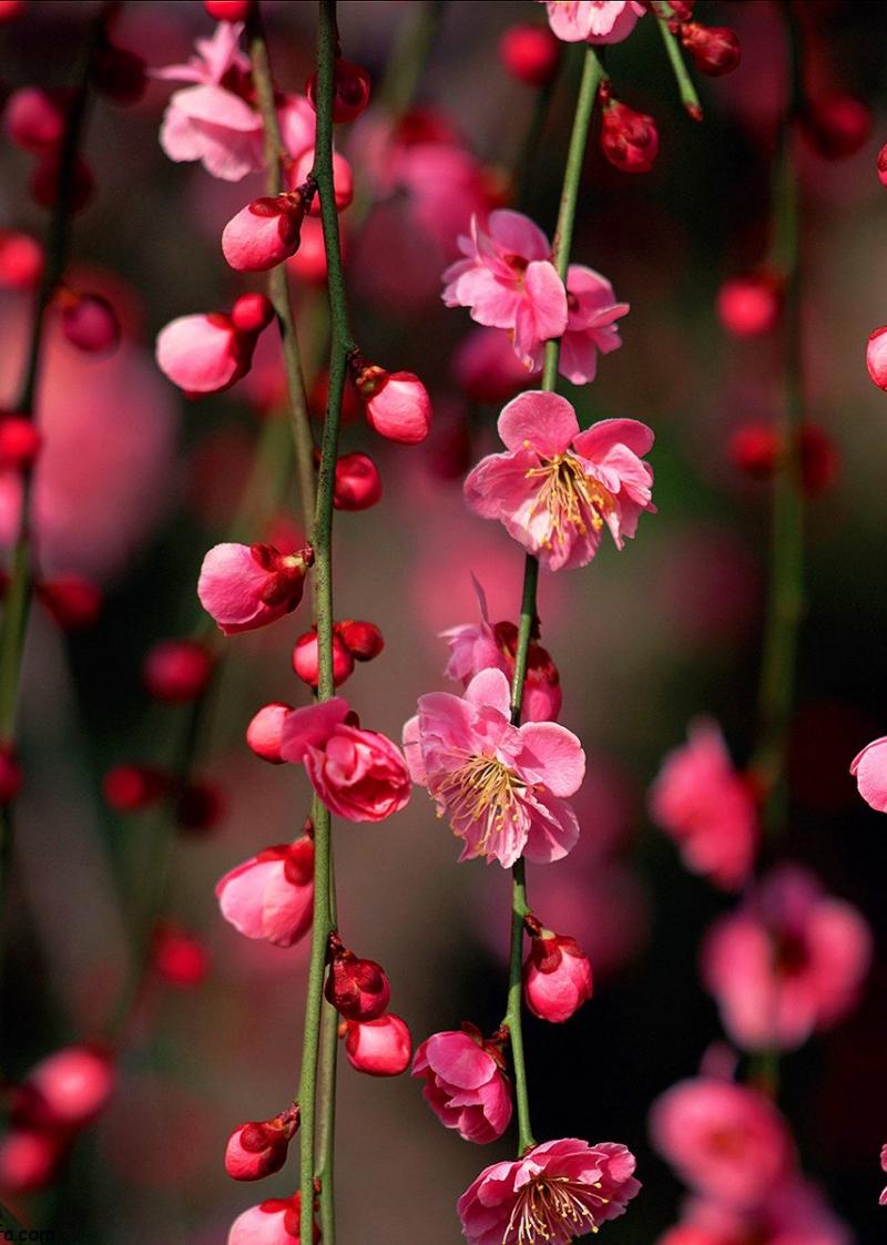 شانزدهمین نمایشگاه بین المللی گل و گیاه مشهد