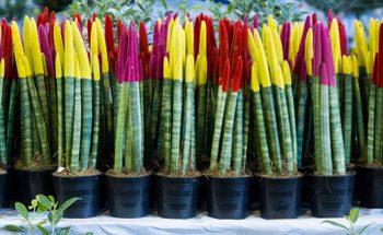نمایشگاه بین المللی گل و گیاه مشهد