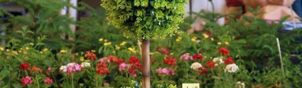 Istanbul International Exhibition of Plant